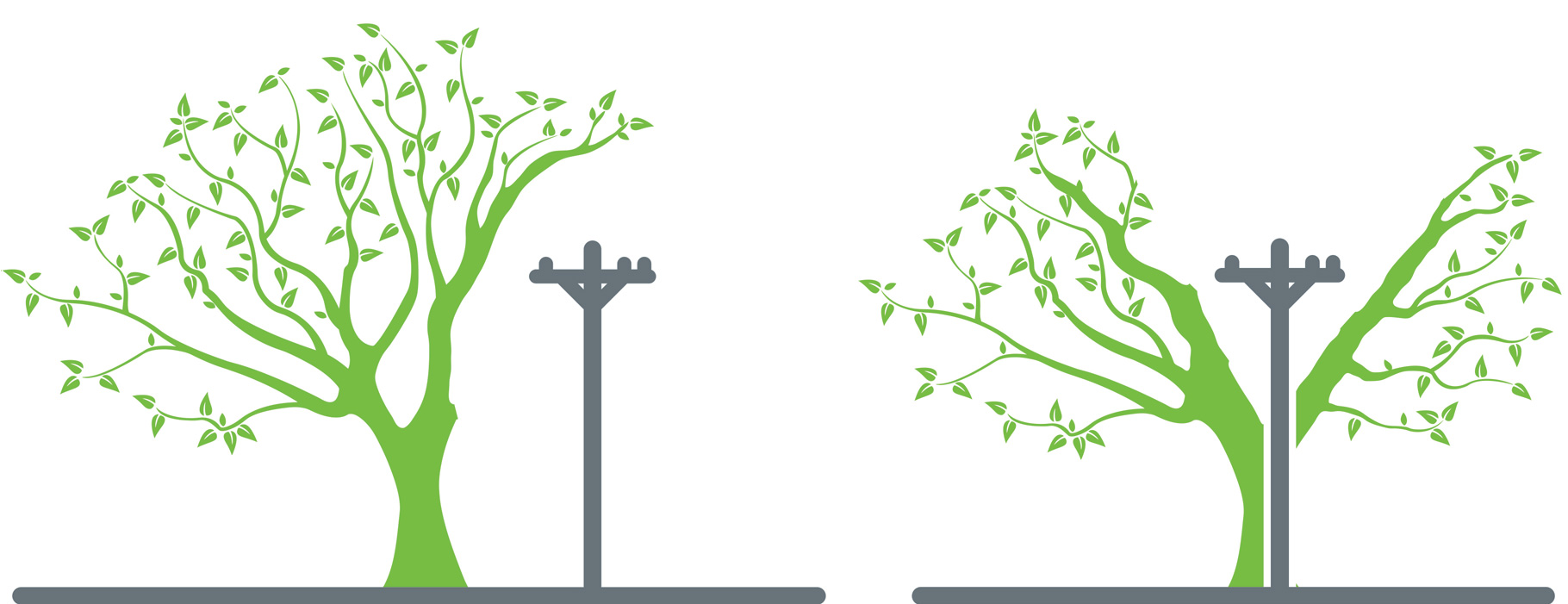 Illustration of proper tree planting under Distribution powerlines.